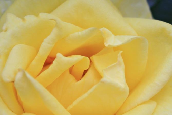 Petalos amarillos