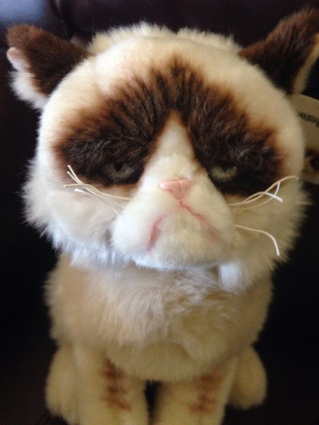 Grumpy Cat Toys R Us