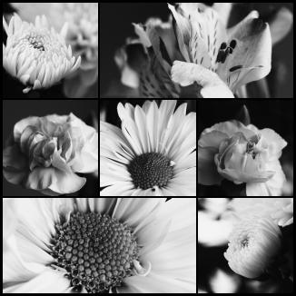 PicMonkey Collage Basicos