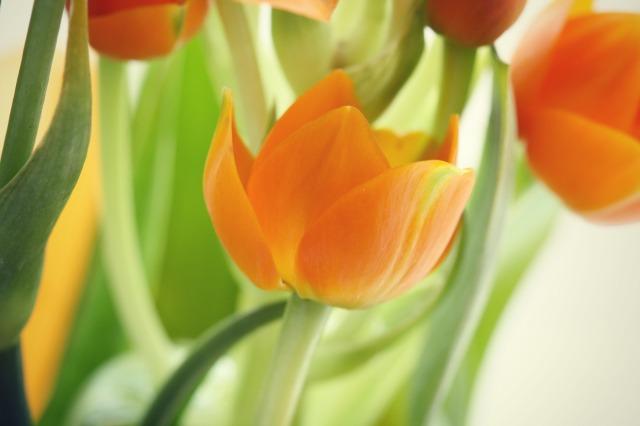 Sun Star Orange