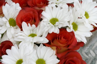 roses and daisies