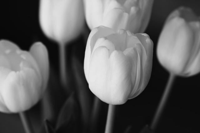 B/W Tulips